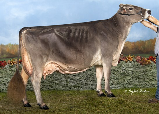/Portals/0/Images/spotlight/94-Point Cows/thumbs/Eloc_Wagor_Kandid_BF33542-agc.jpg