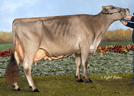 /Portals/0/Images/spotlight/94-Point Cows/thumbs/Voelkers Lovery Moe BF38075.jpg